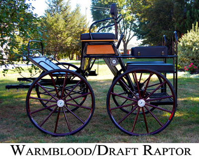 warmblood raptor